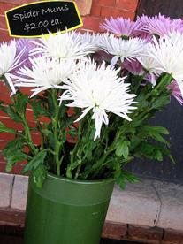 Label-in-flowers.jpg